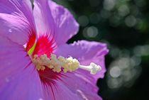 Blütenrausch 4 von loewenherz-artwork