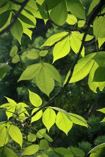 Greens von sylbe