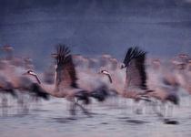 cranes 1 von Ewa Bednarek