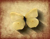 Butterfly Shadow von Steve Ball