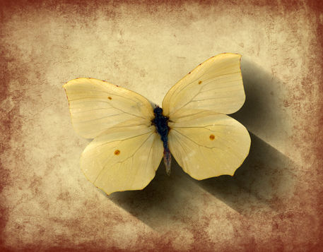 Butterfly-grunge-tilt-shad