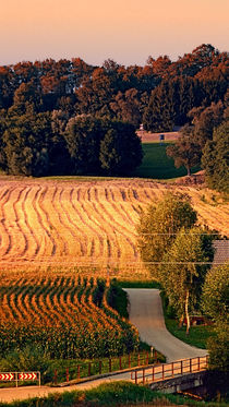 Felder an einem Sommerabend | Landschaftsfotografie by Patrick Jobst