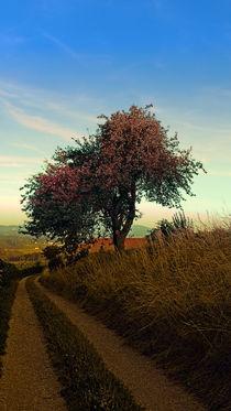 Wanderweg, Baum, Sommermorgen | Landschaftsfotografie von Patrick Jobst