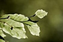 green 1 von Sandro Loos