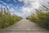 Der Weg zum Meer von Beate Zoellner