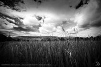 Scotland B/W von Kiara Black
