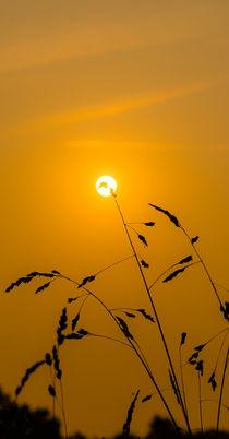 Golden Sun by Thomas Ulbricht