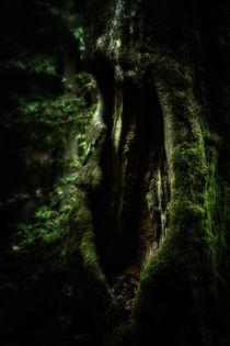 Die Höhle by wally