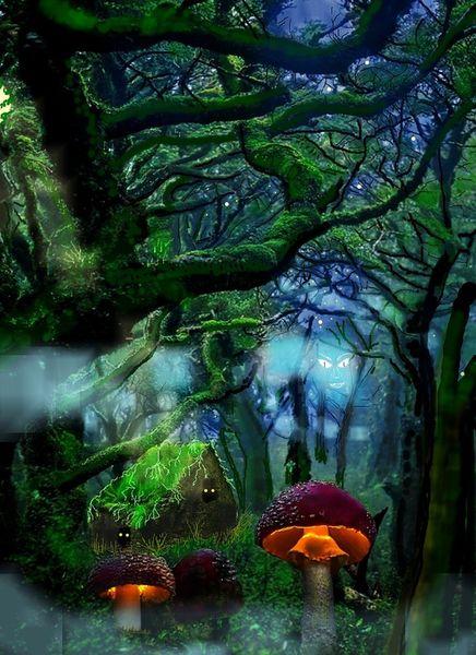 Waldeinsicht