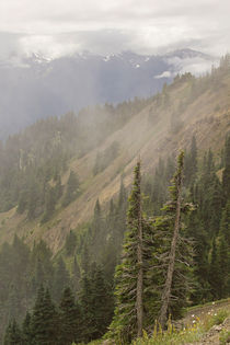 Low Ceiling Hurricane Ridge by Peter J. Sucy