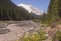 White River and Mount Rainier by Peter J. Sucy