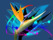 Paradiesvogelblume by Norbert Hergl
