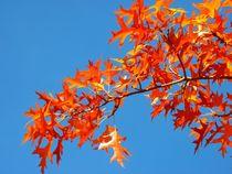 Herbstfarben by Ricarda Balistreri
