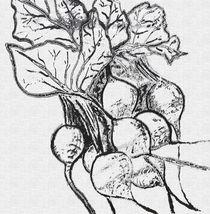 Beetroot von Caroline Allen