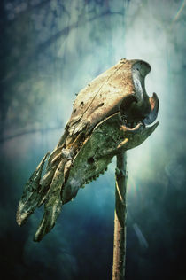 Animal Skull von AD DESIGN Photo + PhotoArt