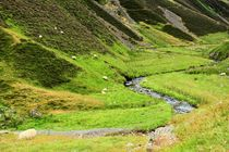 Ein Bächlein im Moffat River Valley by gscheffbuch