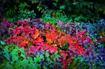 Farben des Herbstes by blueandyou-photography