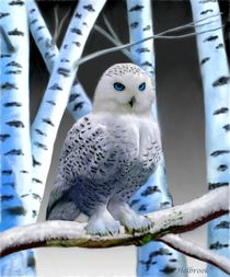 Blue-eyed Snow Owl by holbrookart