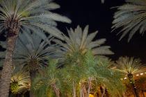 Palma Breeze by Marcia Treiger