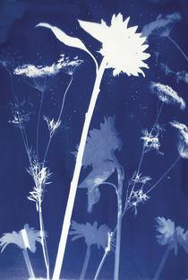 Sunflower by Marcia Treiger