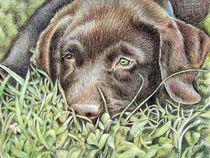 Tired Young Labrador von Nicole Zeug