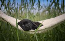 Ein Bett im Kornfeld von Heidi Bollich