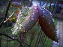 some raindrops von Isabell Tausche