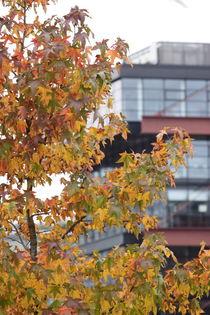 Hamburg, Herbst Hafencity - autumn Harbourcity 7 by Marc Heiligenstein