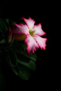 Pink-sense