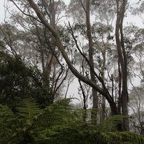 Rainforest von Kitsmumma Fine Art Photography