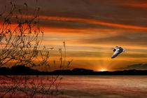 Wild Goose In Flight by tomyork