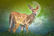 Portrait Of A Fawn by tomyork