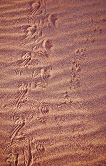 Spuren im Sand von loewenherz-artwork
