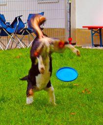 Dog-Frisbee by M. Ziehr