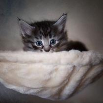 Dsc-1702-dot-t-nw-kitten2-09-14