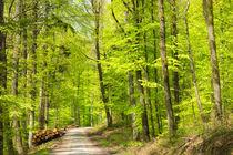 Grüne Bäume im Wald im Frühling Naturpark Schönbuch von Matthias Hauser