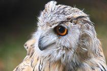 Eule - Owl von Jörg Hoffmann