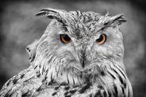 Uhu - Owl - Eule von Jörg Hoffmann