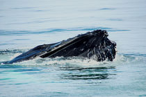 cape cod ... lovely giants of the sea 1 by meleah