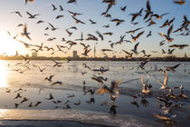 Hamburg gulls by Simon Andreas Peter