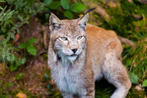 2014-09-07-wildpark-pforzheim-0160