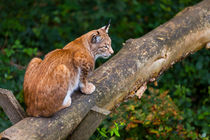 2014-09-07-wildpark-pforzheim-0185
