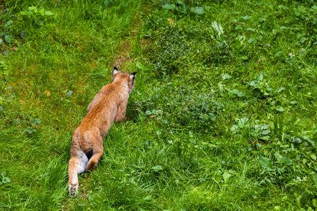 2014-09-07-wildpark-pforzheim-0432