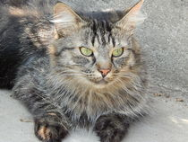 Kitty 2  von deern-vun-diek