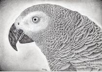Graupapagei - Das wachsame Auge von sanchez