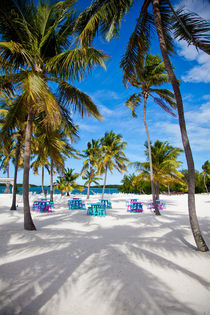Whimsy, Morada Bay, Florida, USA von Tasha Komery