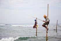 Stilt fishermen, Welligama by Tasha Komery