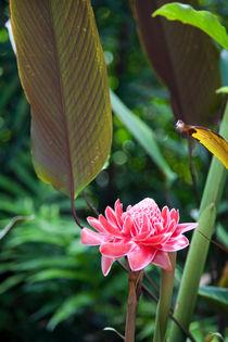 Lone flower, Botanical Gardens, Singapore von Tasha Komery