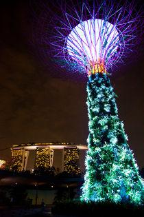 The Supertree, Gardens by the Bay, Singapore von Tasha Komery
