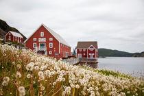 Landscape, Newfoundland, Canada by Tasha Komery